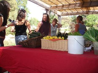 getting-back-to-the-basics-three-economical-ways-women-go-local-with-food-1